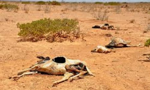 Be Ready for Disaster: Drought Survival