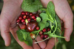 Survival Skills: Food Foraging