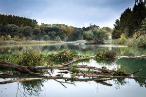 Survival Skills: Water Gathering